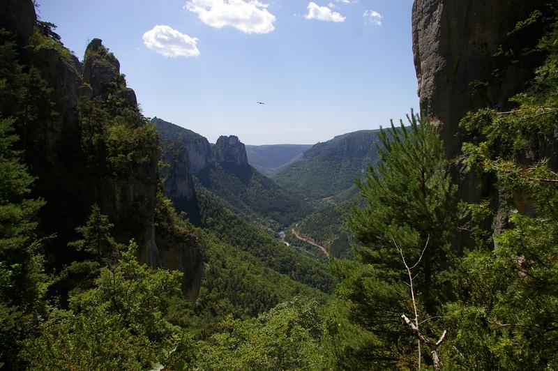 un vautour au dessus des Gorges du Tarn