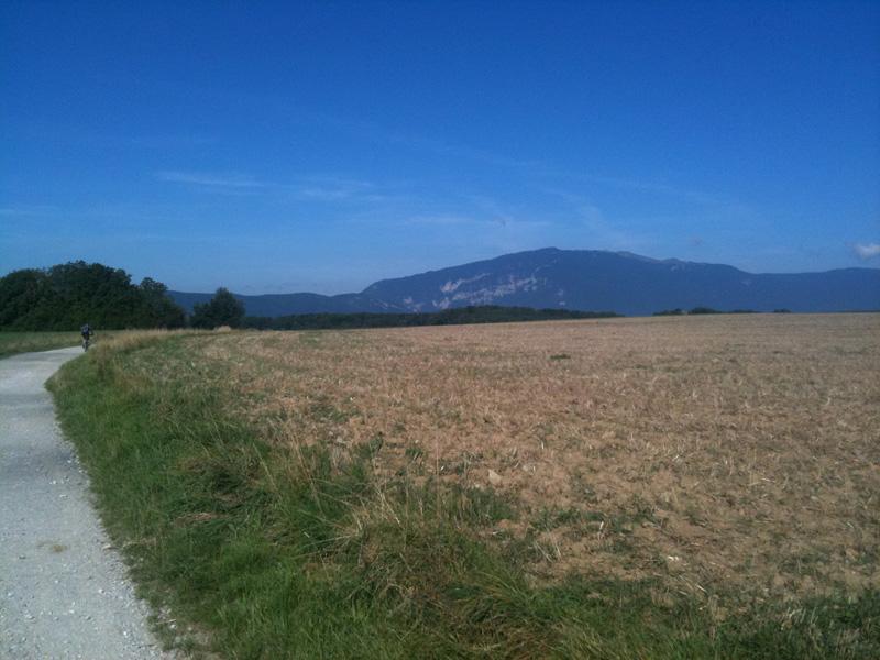 le long des champs de blé face au Jura