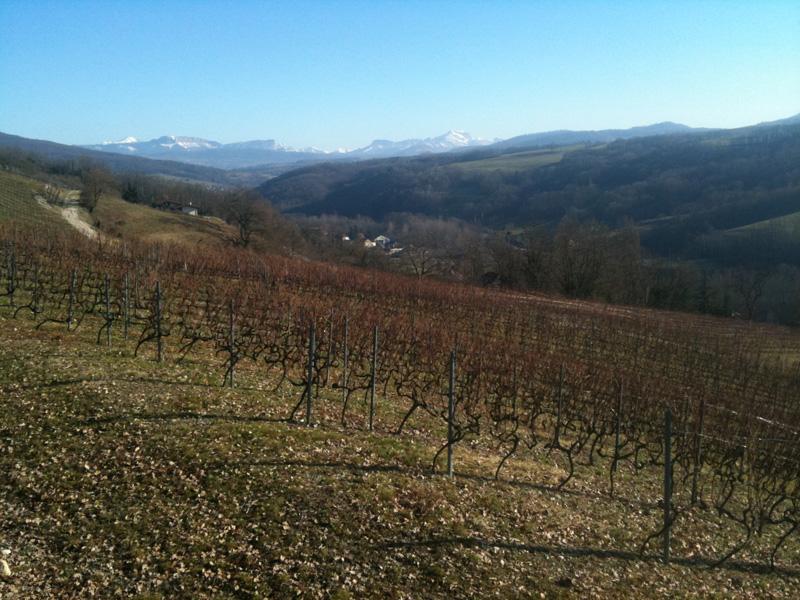 vue sur le Mont Blanc, le Parmelan et la Tournette au dessus des vignes
